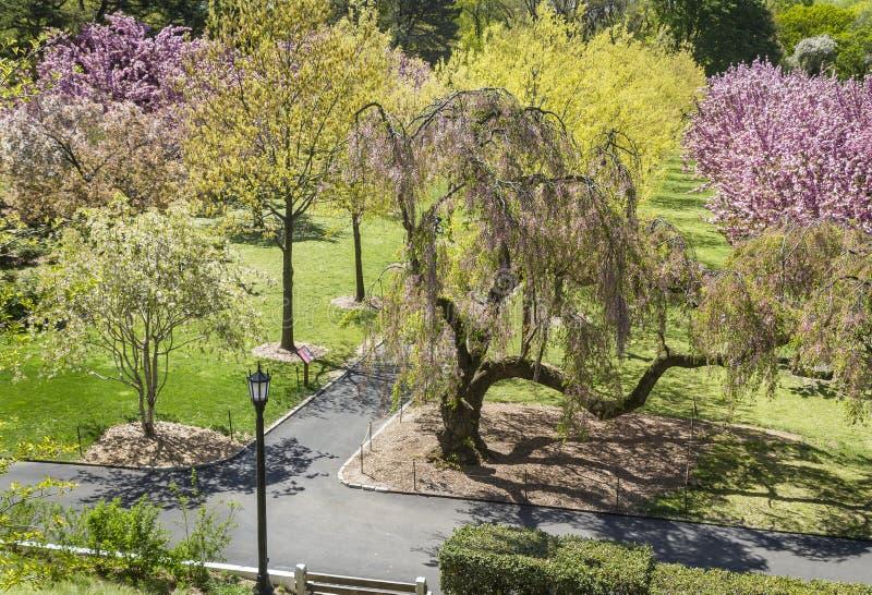 Botanischer Garten Cherry Pathways stockfotografie