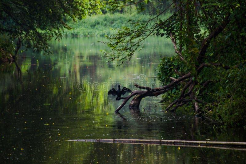 Botanischer Garten in Howrah lizenzfreie stockfotografie
