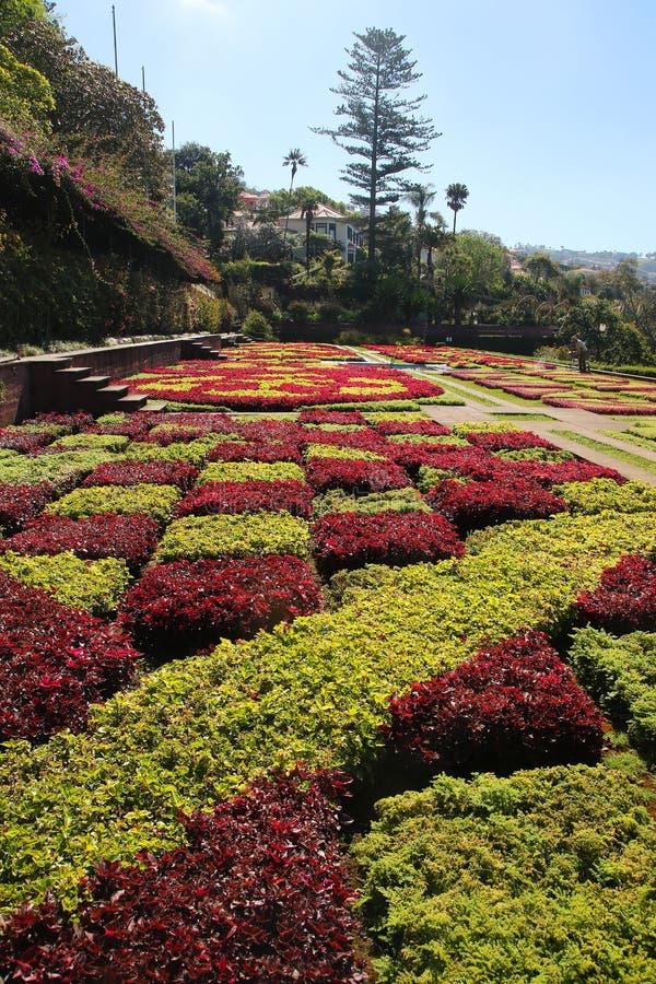 Botanischer Garten in Insel Funchals Madeira stockfotografie