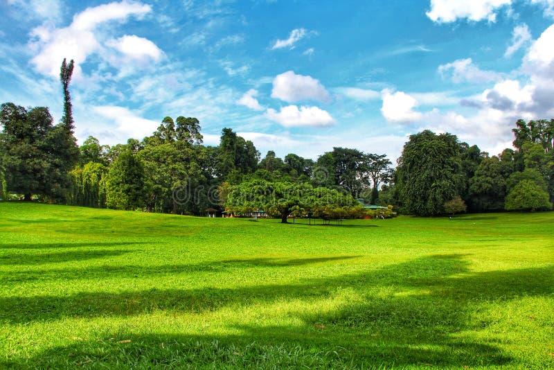 Botanischer Garten Kandys in Sri Lanka lizenzfreies stockfoto