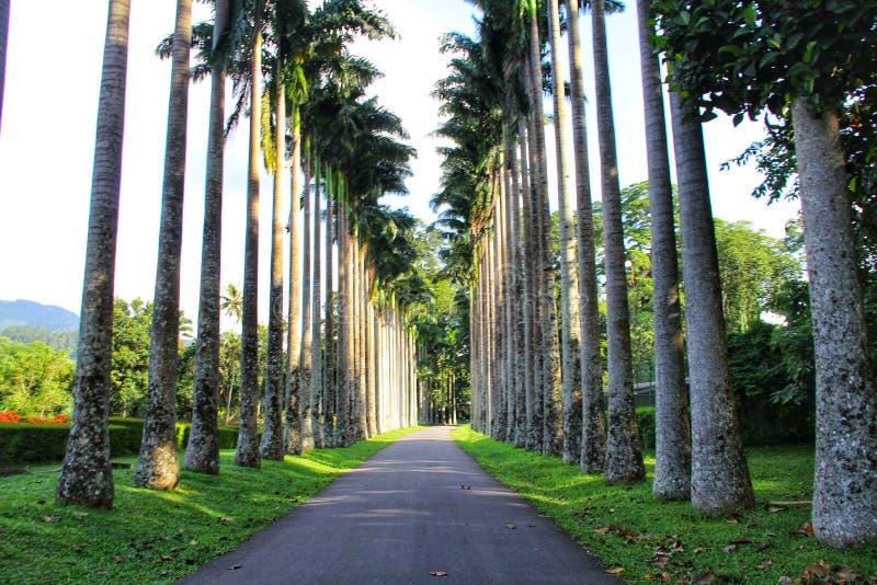 Botanischer Garten Kandys in Sri Lanka stockfotos