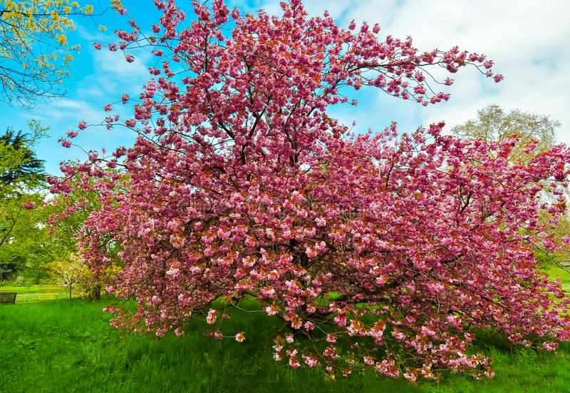 Botanischer Garten Kew im Frühjahr, London, Vereinigtes Königreich stockbild