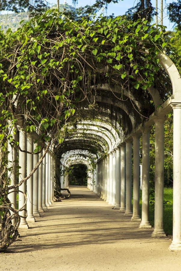 Botanischer Garten in Rio de Janeiro lizenzfreie stockfotos
