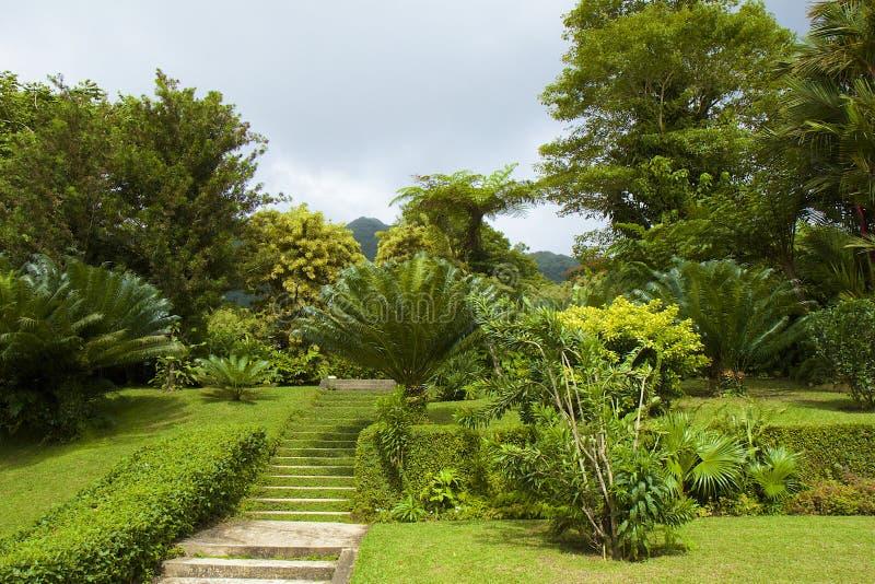 Botanischer Garten in St. Vincent, karibisch stockfotos