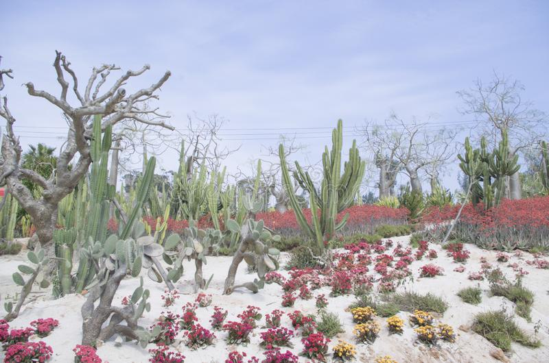 Botanischer Park Xiamens lizenzfreie stockfotos