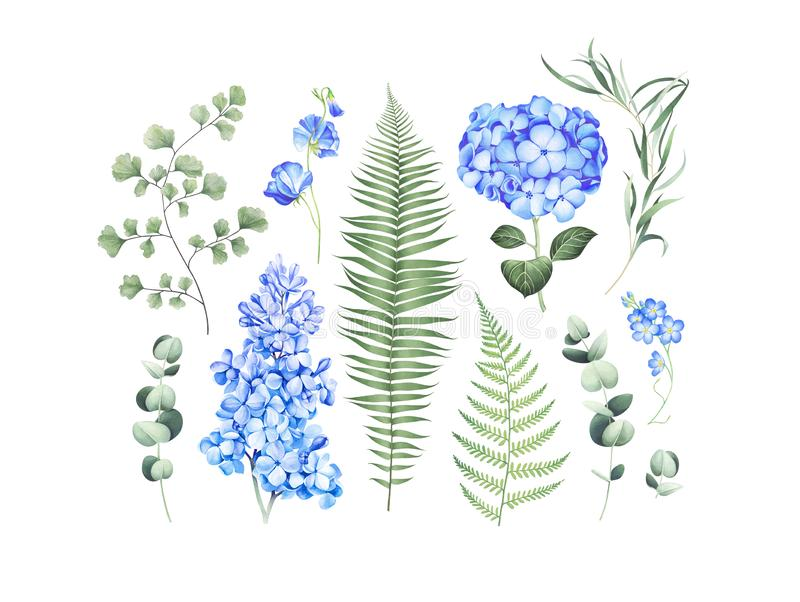 Botanischer Satz mit den Eukalyptusniederlassungen, Farn und blauen Blumen lokalisiert auf weißem Hintergrund Dekoratives Bild ei lizenzfreie abbildung