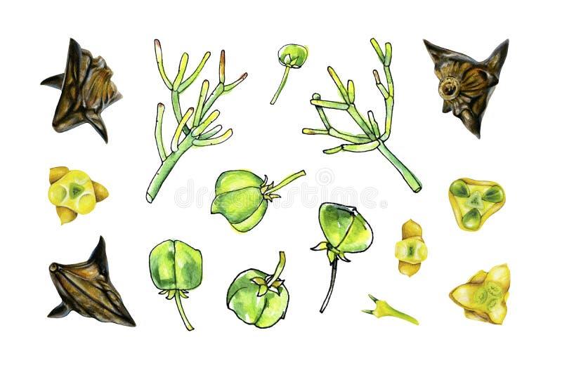 Botanischer Satz verschiedene Stücke Anlagen lizenzfreie stockfotos