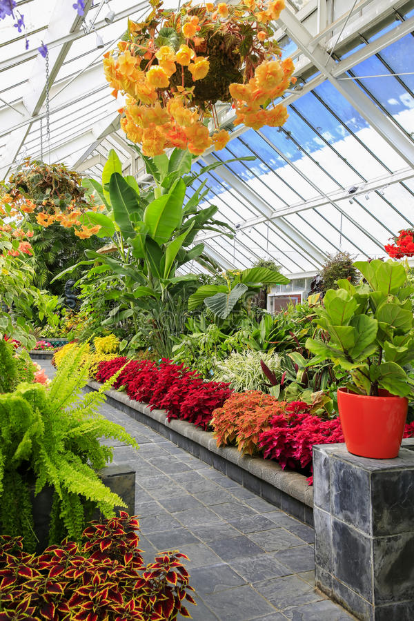 Botanisches Gewächshaus Begonia Houses, Wellington, Neuseeland lizenzfreie stockbilder