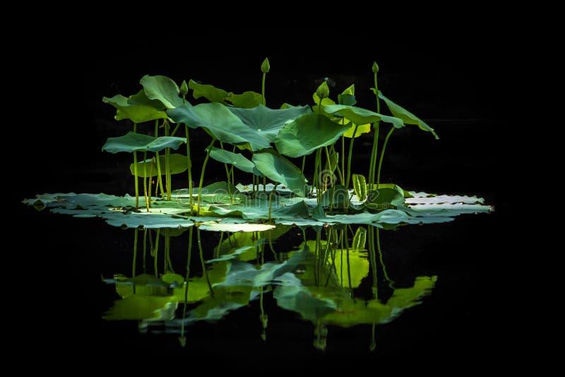 Botanisk ö royaltyfria bilder