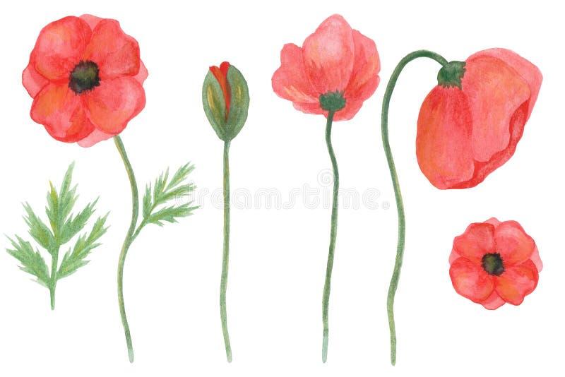 Botanisk blom- uppsättning av vallmo Hand dragen vattenf?rg stock illustrationer