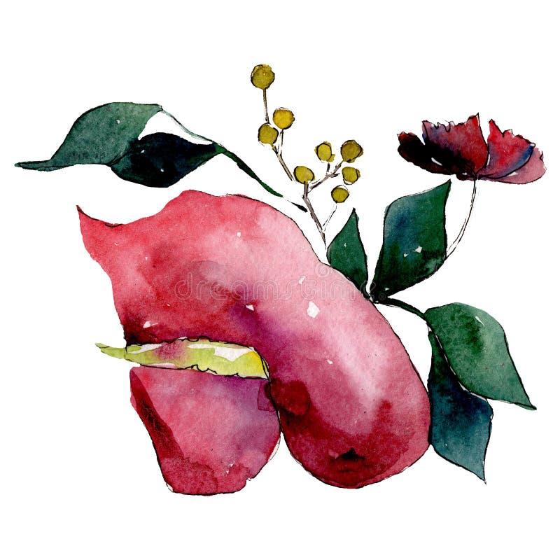 Botanisk blomma för röd calla Isolerad bukettillustrationbeståndsdel grön leaf set vattenfärg för bakgrundsgrunddesign royaltyfri illustrationer