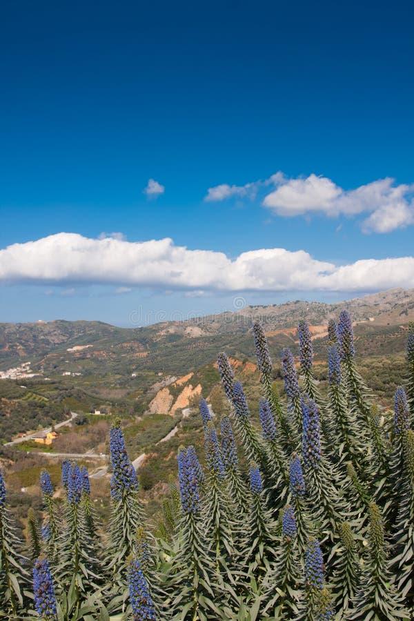 botanisk crete trädgård royaltyfria foton