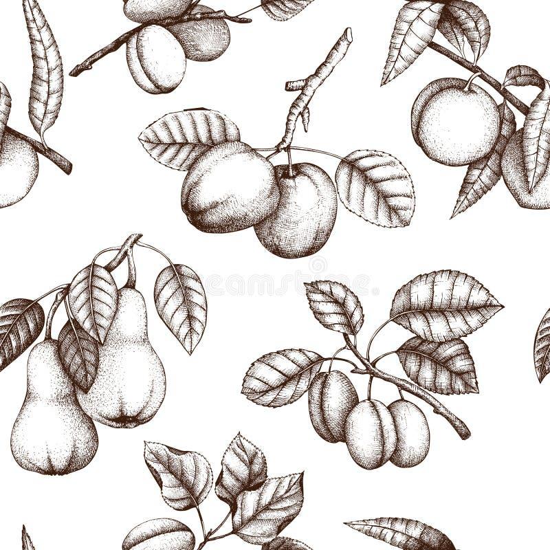 Botanisk illustration för valnöt Tappningträdet skissar på vit bakgrund Hand drog muttrar stock illustrationer