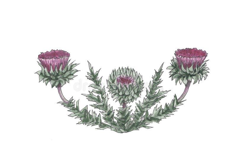 Botanisk illustration för vattenfärg av tistelgränsen stock illustrationer