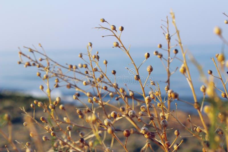 Botanisk sk?nhet h?rlig gjord naturvektor f?r bakgrund Konstig filial av en v?xt royaltyfri foto