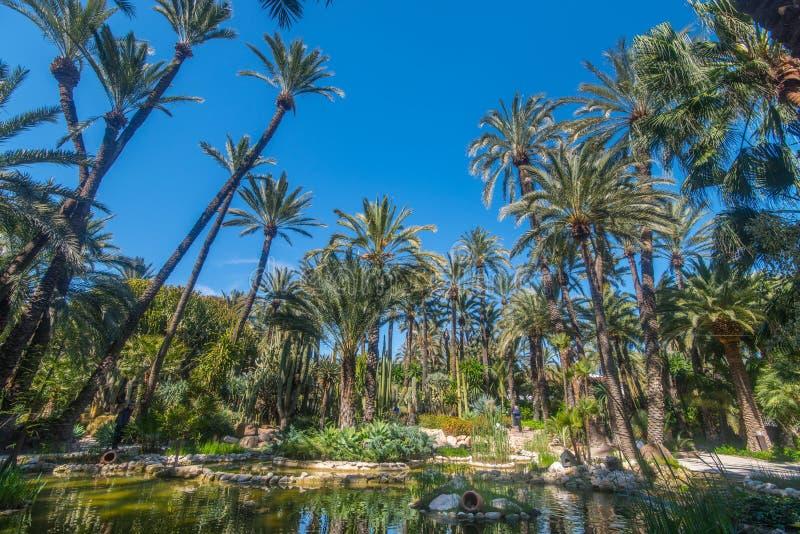 Botanisk trädgård Huerto del Cura i Elx royaltyfri fotografi