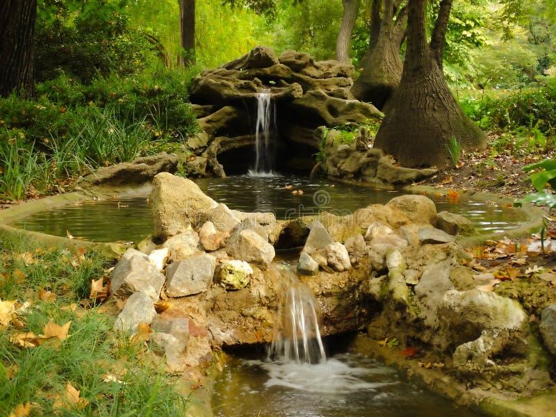 Botanisk trädgård i Sydamerika royaltyfri fotografi