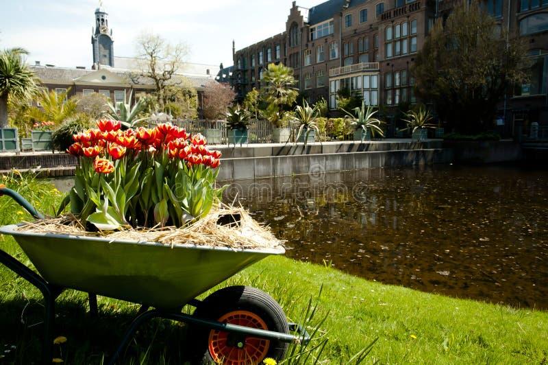 Botanisk trädgård - Leiden - Nederländerna royaltyfri fotografi