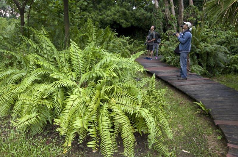 Botanisk trädgård taiwan för hålla ögonen på för fågel royaltyfria foton