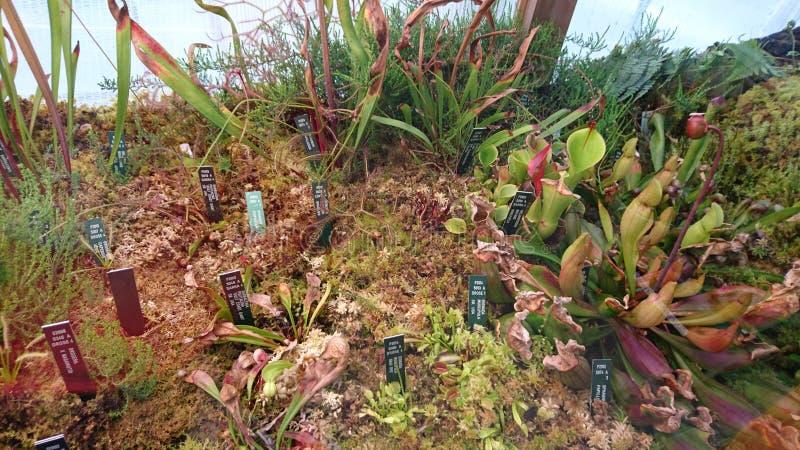 Botanisk trädgårdkaktus royaltyfri fotografi