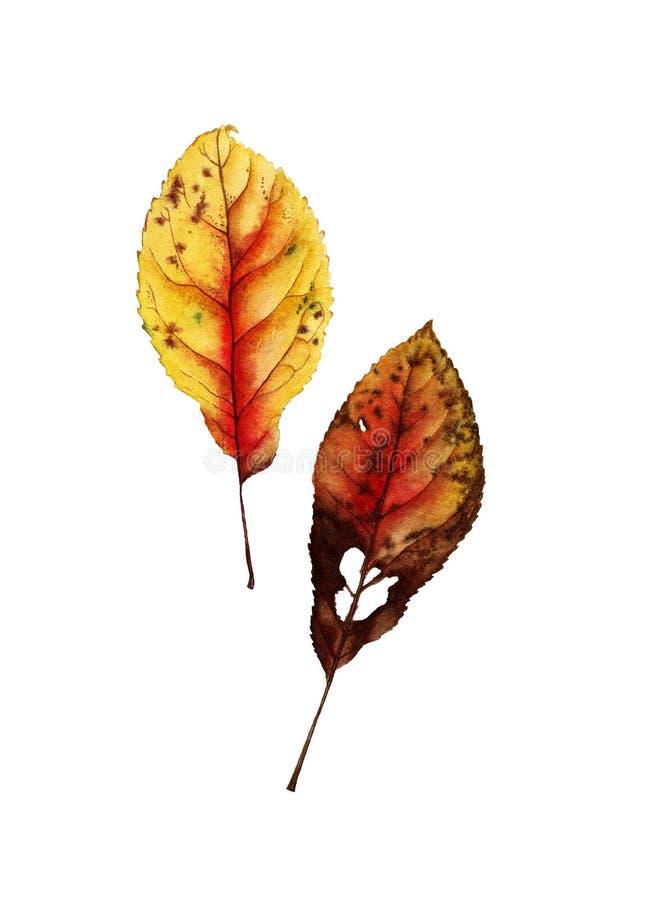 Botanisk vattenfärg av höstbladet arkivbild