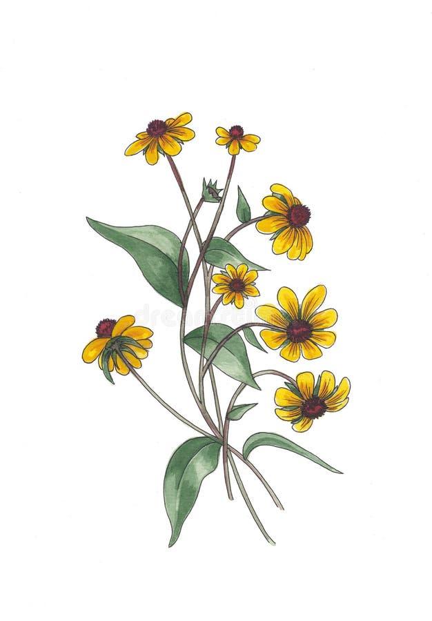 Botanisk vattenfärgillustration av gula vildblommor stock illustrationer