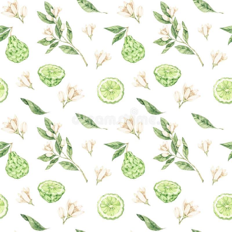 Botaniska illustrationer f?r vattenf?rg Sömlös modell med bergamotblomningen och frukt Citrusa bergamiablommor, frukt och sidor royaltyfri foto
