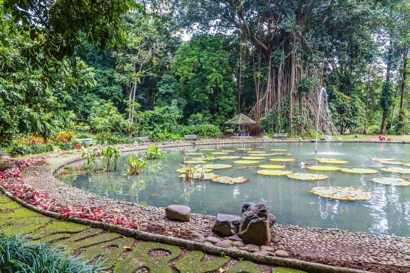 Botaniska trädgårdar Bogor, västra Java, Indonesien arkivfoton