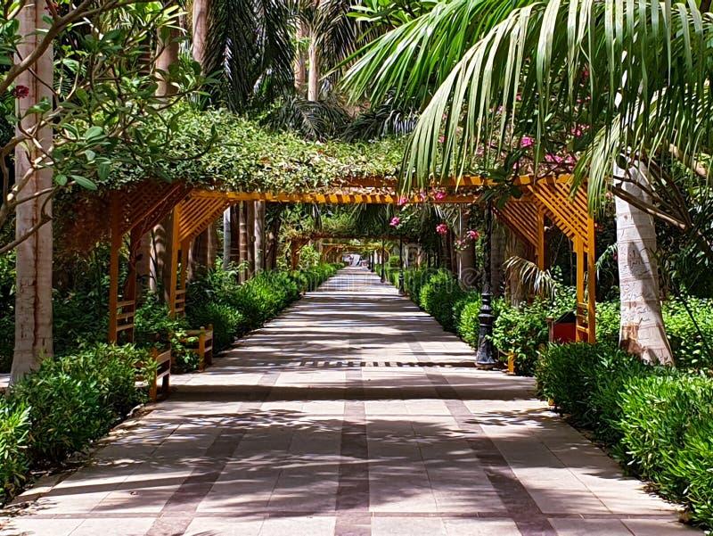 Botaniska trädgårdar i Aswan Egypten längs Nilen arkivfoton