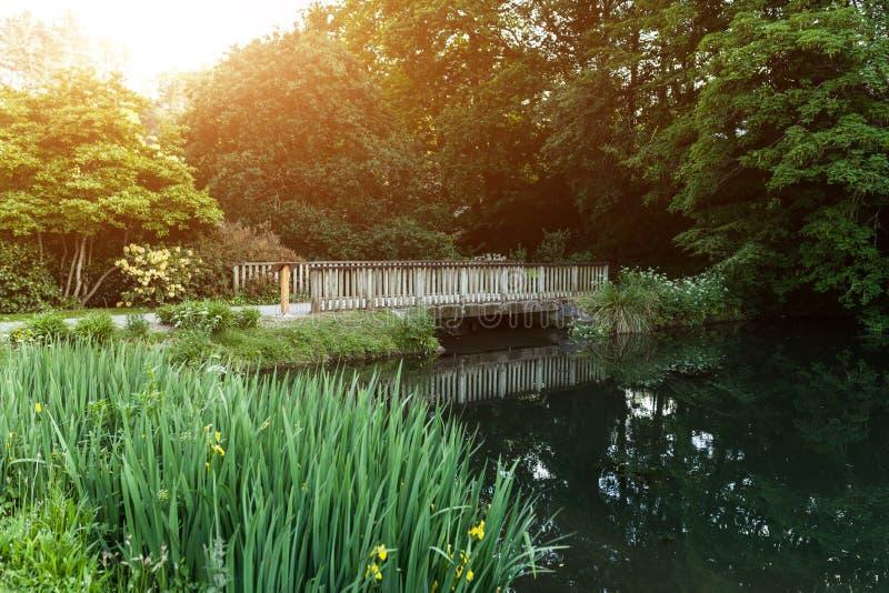 Botaniska trädgården Le Vallon du stack Alar Brest France 27 kan 2018 - den lilla sjön och brosommarsäsongen arkivbild