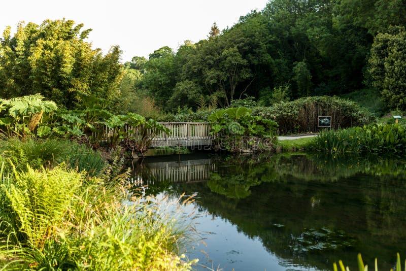 Botaniska trädgården Le Vallon du stack Alar Brest France 27 kan 2018 - den lilla sjön och brosommarsäsongen royaltyfri foto
