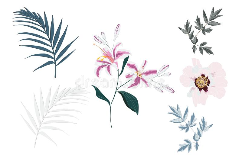 Botaniska vektorbeståndsdelar: tropiska rosa liljor, pionblommor och palmblad vektor illustrationer
