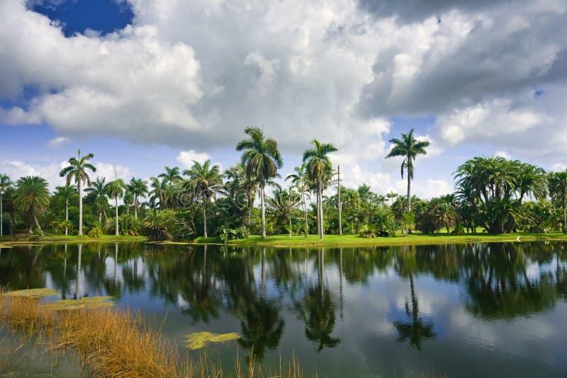 botaniskt fairchild trädgårds- tropiskt arkivbilder
