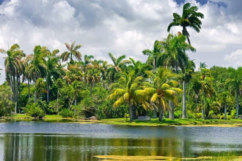 botaniskt fairchild trädgårds- tropiskt royaltyfri fotografi