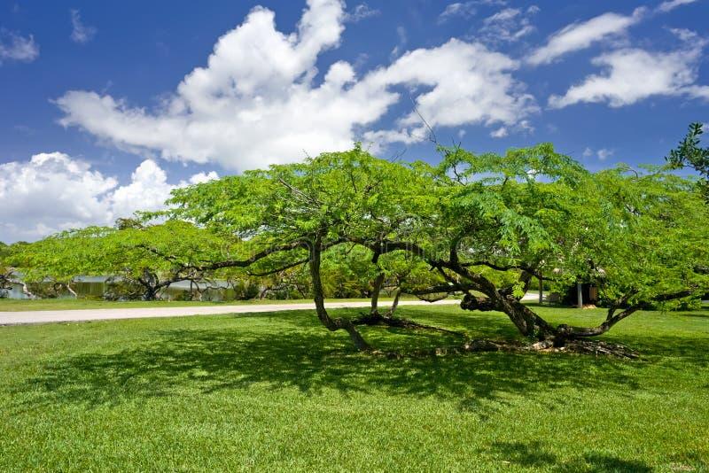 botaniskt fairchild trädgårds- tropiskt royaltyfri foto