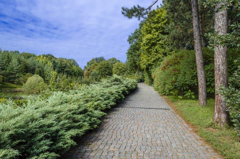 Botaniskt parkera med en uppsättning av träd royaltyfria bilder