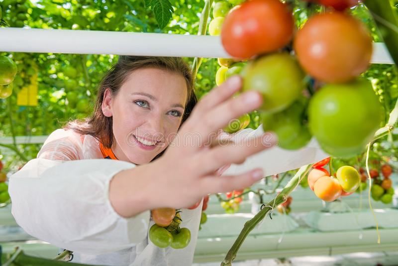 Botanist working in green house stock image