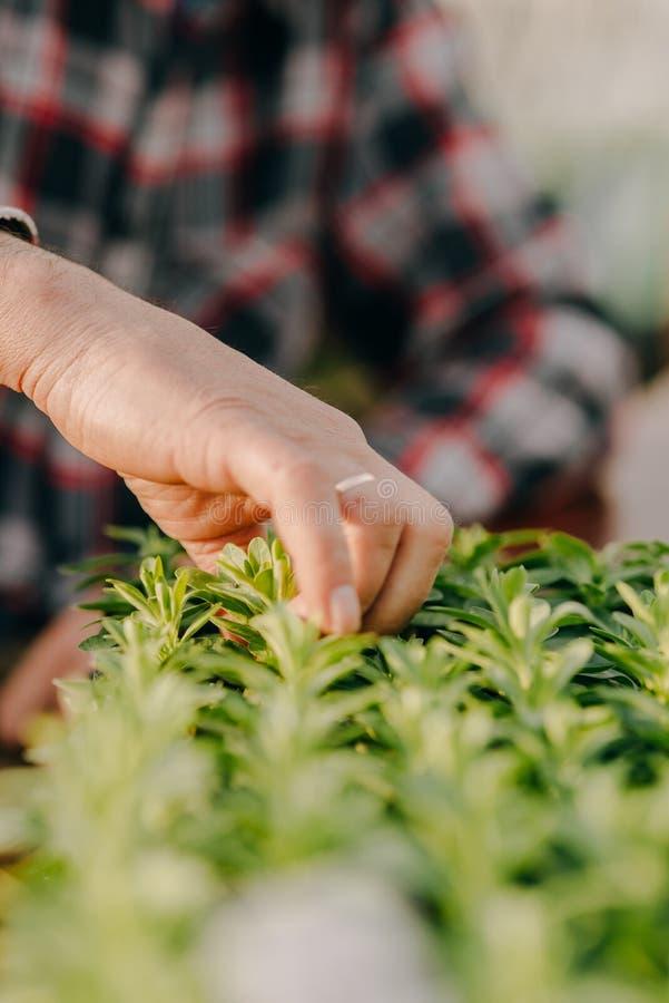 Botaniste masculin plantant des jeunes arbres dans des pots photographie stock
