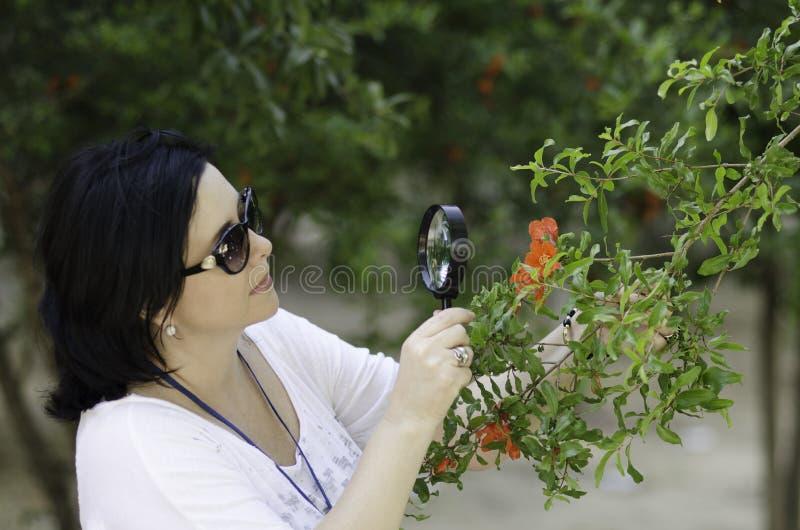 Botaniste vérifiant la croissance des fleurs de grenade image libre de droits