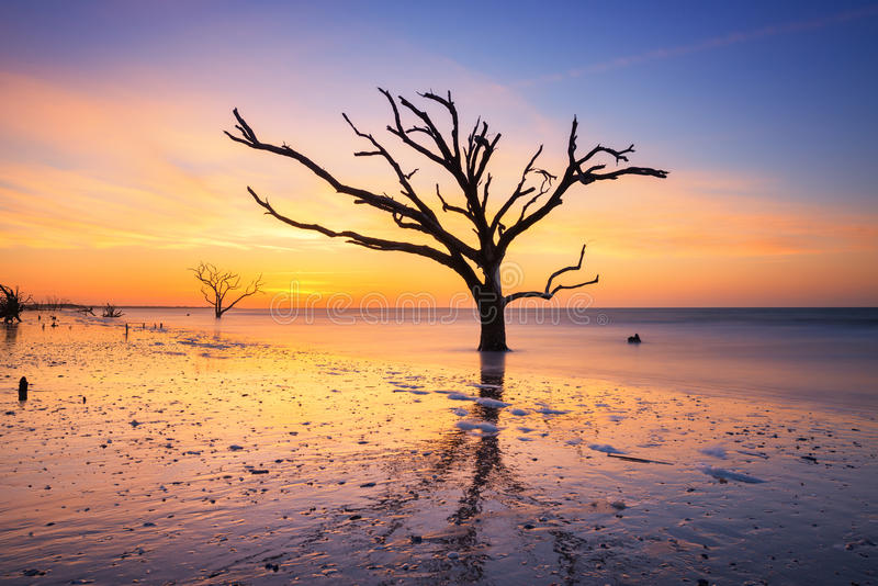 Botany Bay Beach at dawn. Silhouette of a bare tree at Botany Bay Plantation early in the morning stock photo