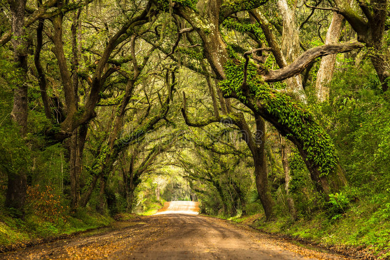 Botany Bay Road. A live oak lined dirt road leading to Botany Bay Plantation located on Edisto Island, South Carolina stock image