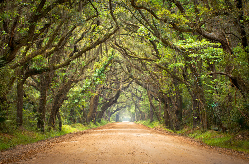Botany Bay Spooky Dirt Road Creepy Oak Trees. Botany Bay Plantation Spooky Dirt Road Creepy Marsh Oak Trees Tunnel with spanish moss on Edisto Island, SC