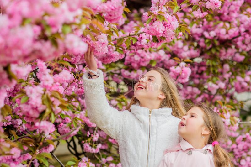 Botany concept. Flowers soft pink clouds. Children enjoy warm spring. Girls posing near sakura. Lost in blossom. Kids on stock images