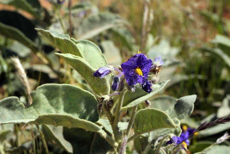 Australia, Botany royalty free stock images