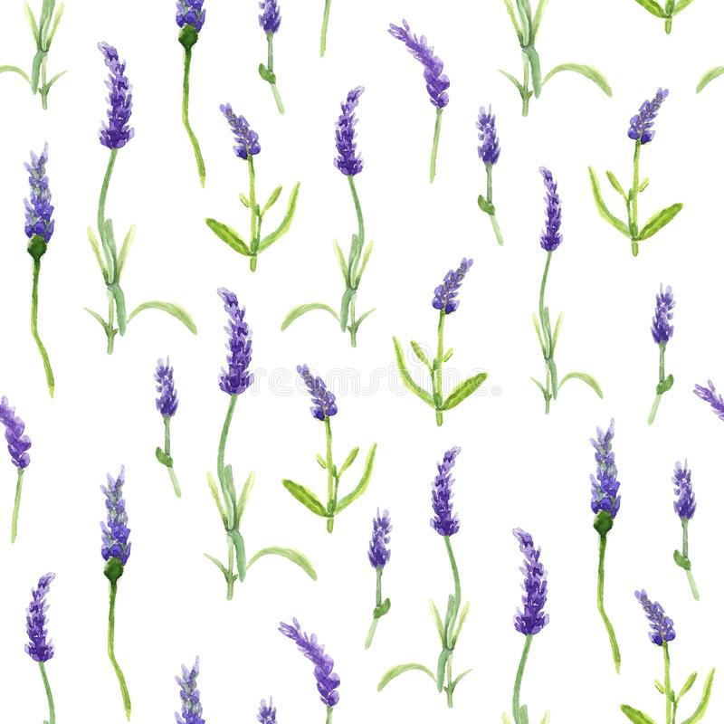 Botany illustration Lavender flowers in a watercolor style on white background. Seamless watercolor pattern royalty free stock photos