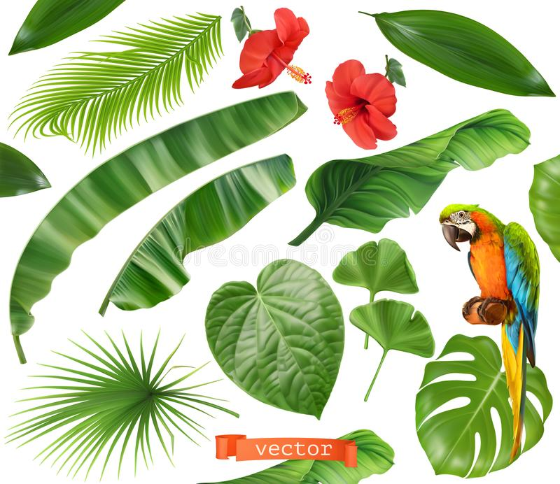 Botany. Set of leaves and flowers. Tropical plants. 3d realistic vector icons. On white background stock illustration