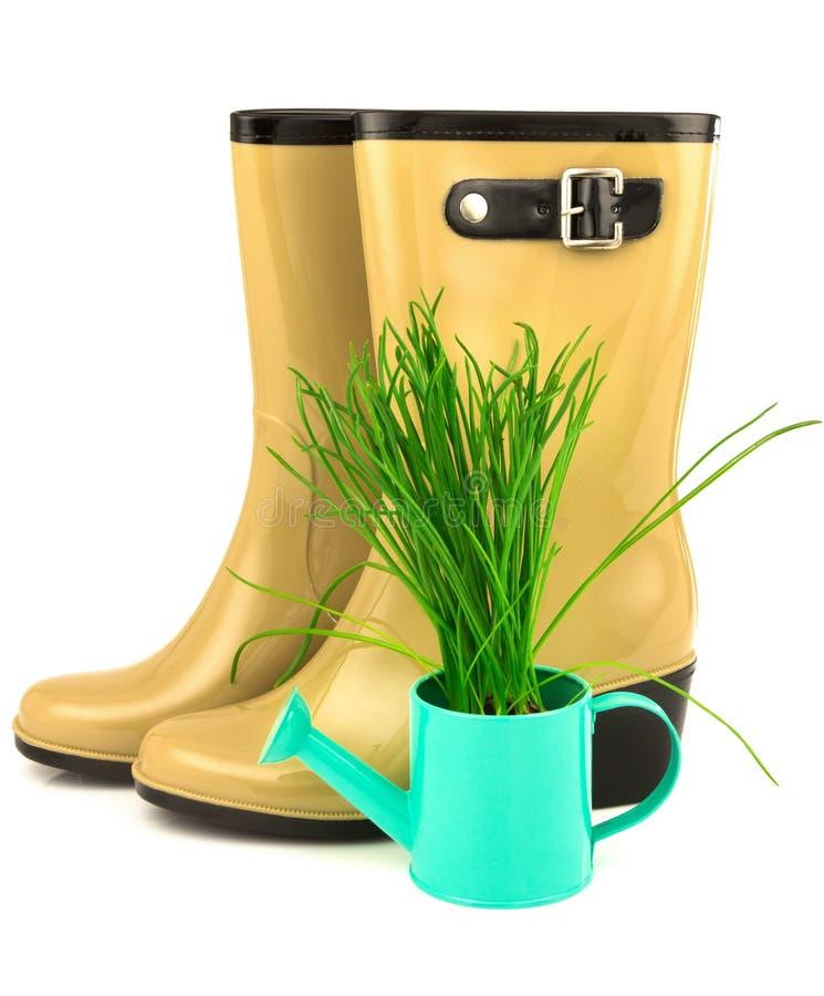 Botas amarelas de borracha com grama da mola na lata molhando azul fotografia de stock