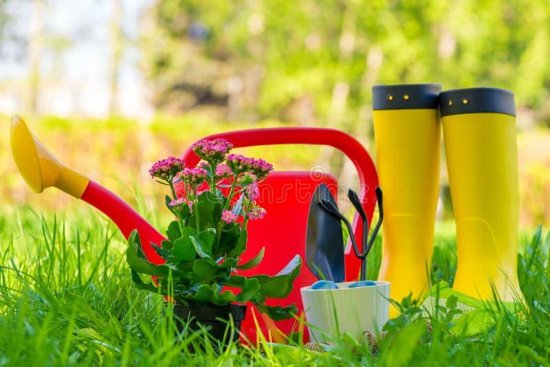 Botas de borracha, lata molhando e ferramentas do jardineiro para trabalhar no jardim imagem de stock royalty free