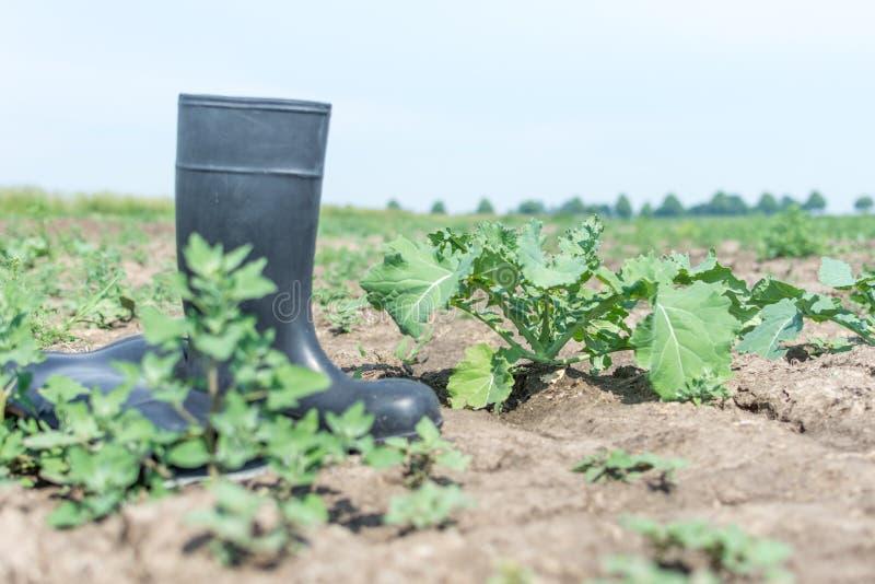 Botas de goma del granjero en un campo seco imagenes de archivo