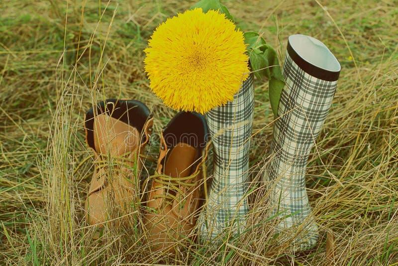 Botas no girassol da grama do campo um par imagem de stock royalty free